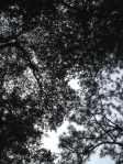 Lou ♥ asked me to take this picture of the sky through the trees!