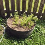Watered all the plants while I was outside.